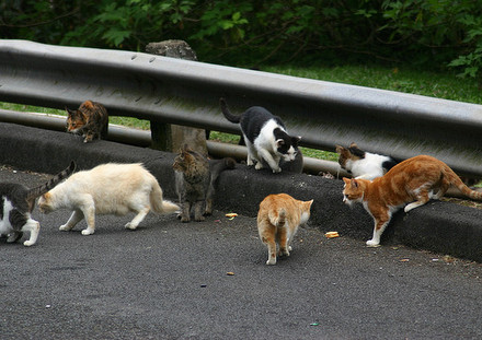 Cats-Group